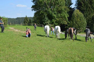 Making of - neue Lipizzanerkollektion_21