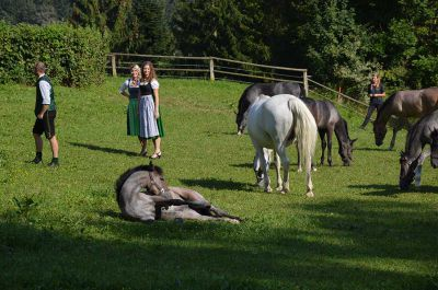 Making of - neue Lipizzanerkollektion_30